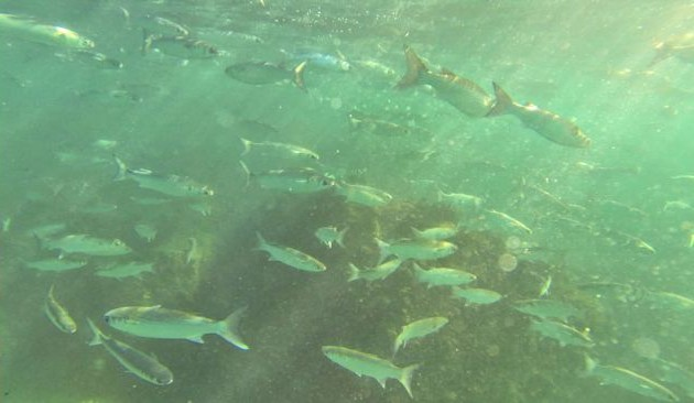Livebaiting the Seaway – The Ultimate Edition