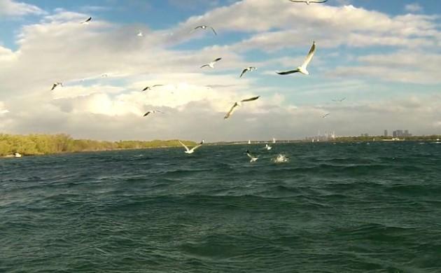Birdwatching – Observing Bird Behaviour to Find Fish